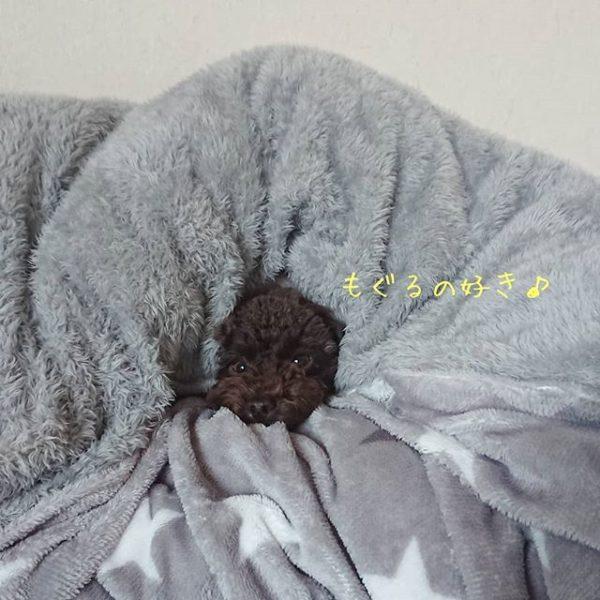 北摂箕面店トリミングブログ更新☆